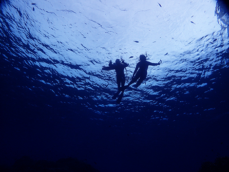 石垣島ダイビングスクール ロコマイカイ