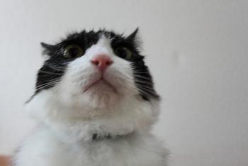 ご指摘と受け止めて、あーんあーん、あはははあーん、ご指摘と受け止めて、一猫として社会猫として・・・折り合いを付けましょうと。