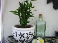 ・:。+植物の癒し・:。+