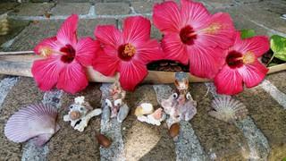 貝殻アート天然香房のお庭にて