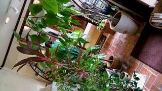 天然香房 台風対策 ジャングル 沖縄市 高原 アロマ ハーブ