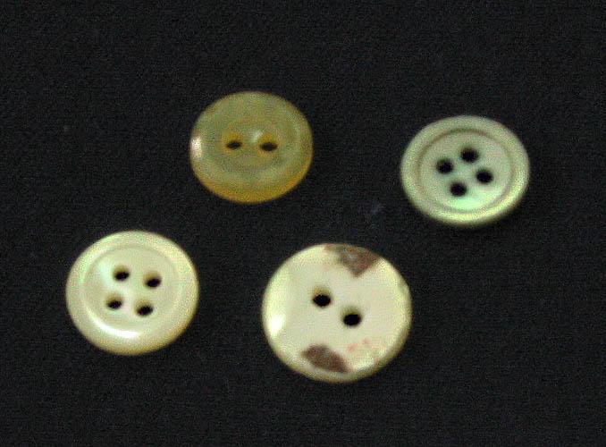 ボタン (植物)の画像 p1_28