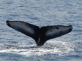 クジラの画像 p1_22